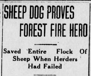 Wildfire Rescue. The Danville Morning News, 10.17.1929