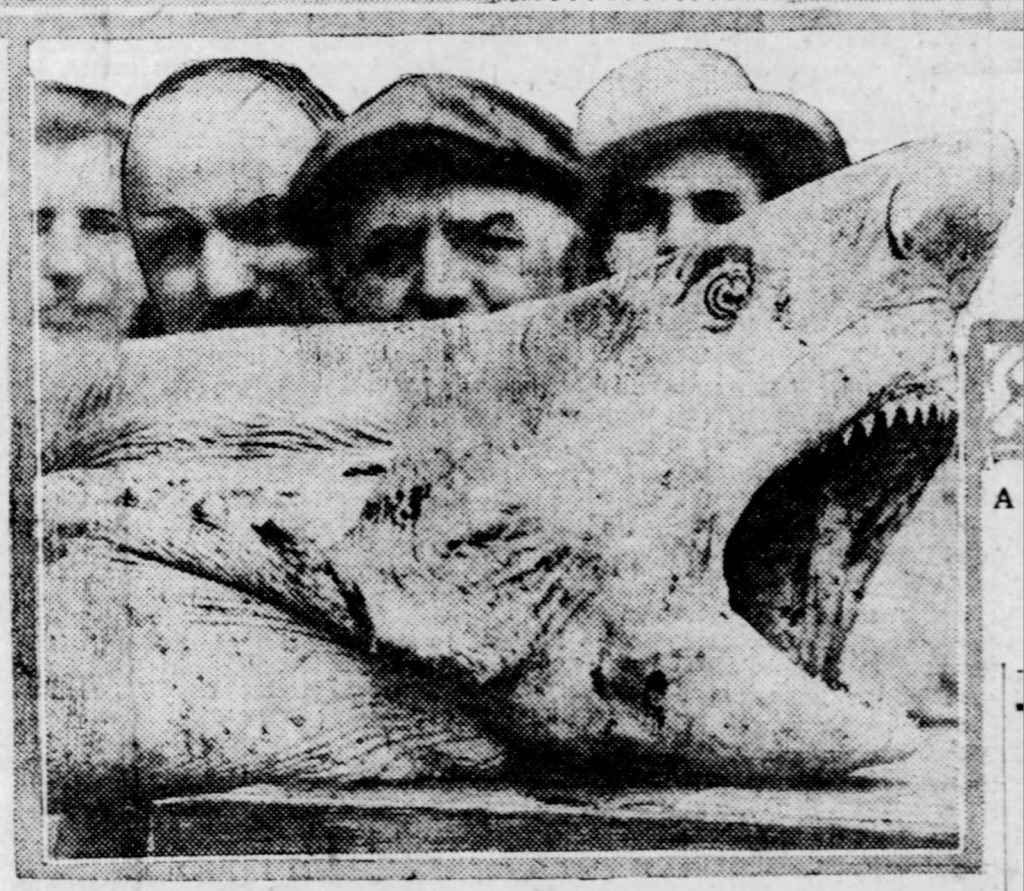 Image of one of the sharks that was killed in 1916. The Philadelphia Inquirer, July 15, 1916